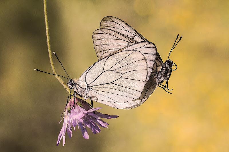 Farfalle di NadiaBettini