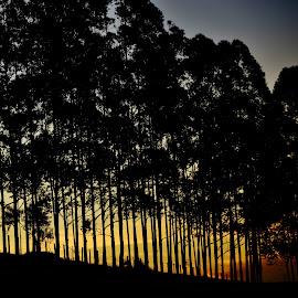 Alianças SP Brazil  by Marcello Toldi - Landscapes Sunsets & Sunrises