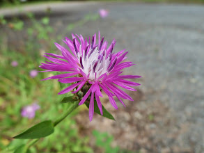 Photo: A flower outside the front gate to the State Forest
