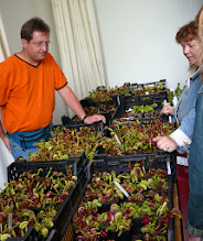 Photo: Sales booth with Dionaea muscipula at the EEE 2007.