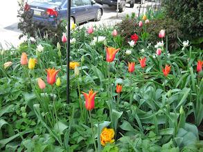 Photo: front garden