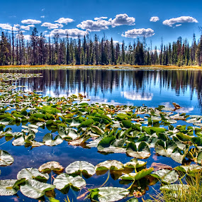 Lily Lake by Brent Flamm - Landscapes Waterscapes ( mountains, reflection, uinta, nature, hdr, utah, rocky mountains, lake, fishing, pond )