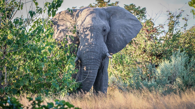 Watch Africa's Big Five live