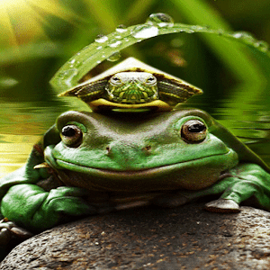 Green Frog Live Wallpaper apk