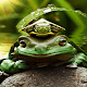 Green Frog Live Wallpaper Download for PC Windows 10/8/7