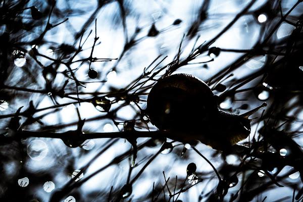 Snail silhouette di GIORGIO VOLPONI