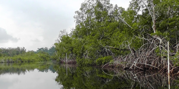 Parque Nacional Pongara