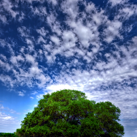 The Lone Tree by Kent Moody - Landscapes Prairies, Meadows & Fields ( single, field, lone, tree, texas, landscape,  )
