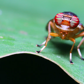 My Eye by Hanif Mohamad - Animals Insects & Spiders