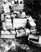Photo: Thường dân bị Việt Cộng chôn sống trong một giếng khô, phát hiện tại Củ Chi. http://www.vietnam.ttu.edu/virtualarchive/items.php?item=va003437 Civilians buried alive by the Viet Cong in a dried well, uncovered at Cu Chi.