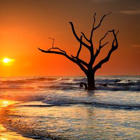 Timeless by Ken Smith - Landscapes Travel ( dead trees, sunrise, landscape, bulls island )