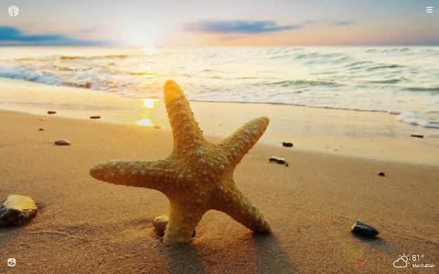 Starfish HD Wallpapers New Tab Theme