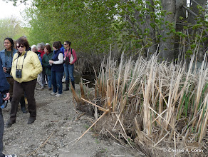 Photo: Walkers and cattail refugees