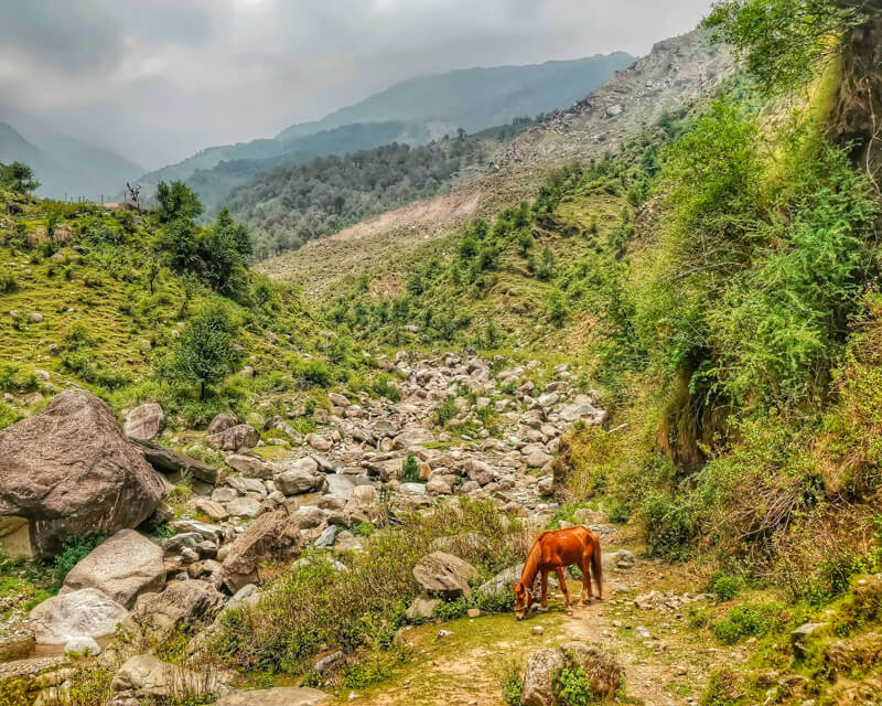 image taken while hiking around in dharamshala