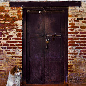 guard by Mahesh Thiru - News & Events World Events ( doors, dogs, street., secure )