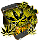 Weed Yellow Fire Theme APK