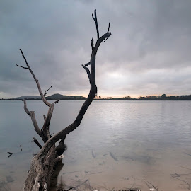 Branches by Geoffrey Wols - Nature Up Close Trees & Bushes ( mountains, dark, tree, dawn, pheagans bay, clouds, branches, water,  )