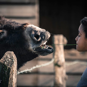 Wild kiss by Anne-Cecile Pflieger - People Street & Candids ( little girl, donkey, weed, feeding, funny, fun, cute, teeth, kid, playing, child, annececilegraphic, girl, happy, outdoors, summer, catching, animal )