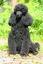Photo: ..und eine herrliche Wolle.