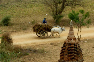 Photo: A wagon pulled by Brahma bulls is going by one of the pagodas.