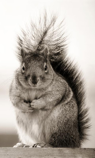 Lwp 다람쥐