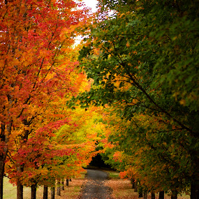 Fall in Oregon by Marina Bandol - Landscapes Travel ( adventure, landscape photography, foliage, beautiful, autumn leaves, autumn, trees, landscape, photography, colors, canon )