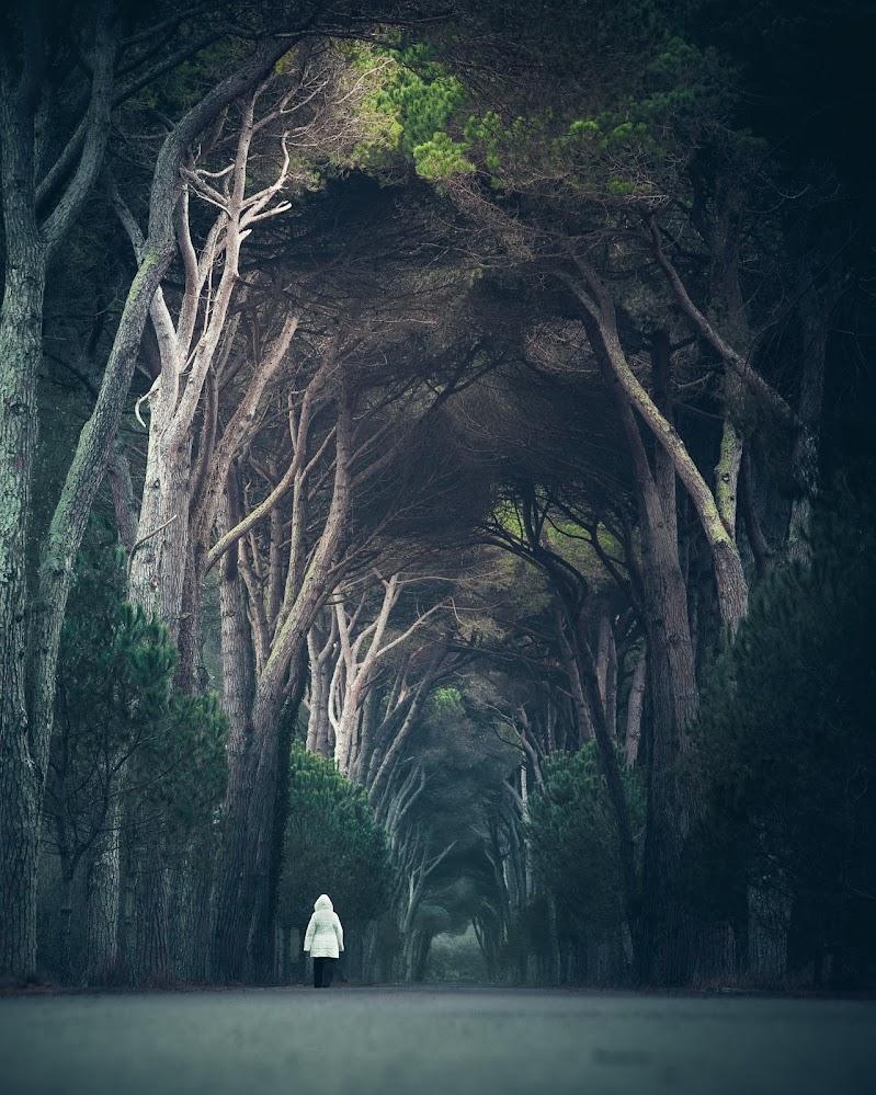 Le favole vivono nei boschi di maxlazzi