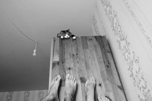 Свадебный фотограф Ольга Цаплина (Tsaplina). Фотография от 09.11.2017