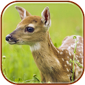 Deer Live HD Wallpapers icon
