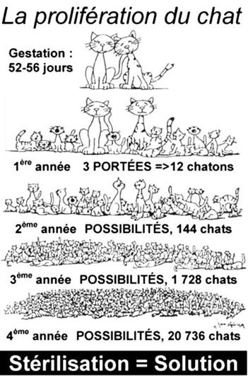 C:\Users\MONPC2013\Desktop\Weshsra\Journée internationale du chat\proliferation.jpg
