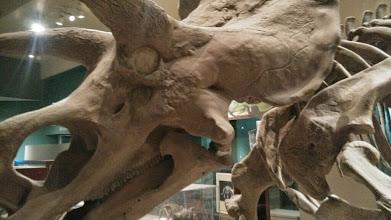 Photo: Динозавр, Музей естественной истории