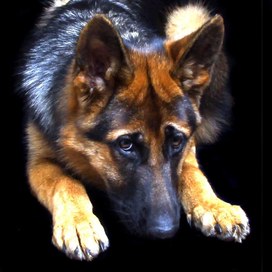 by Jenefer Zeitsch - Animals - Dogs Portraits (  )