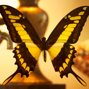 Suspended Animation by Frank Matlock II - Artistic Objects Still Life ( butterfly, nature, still life, yellow, bokeh )