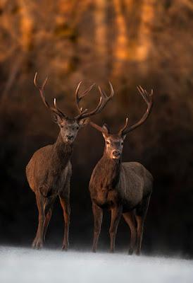 Una coppia nel bosco  di marcovp