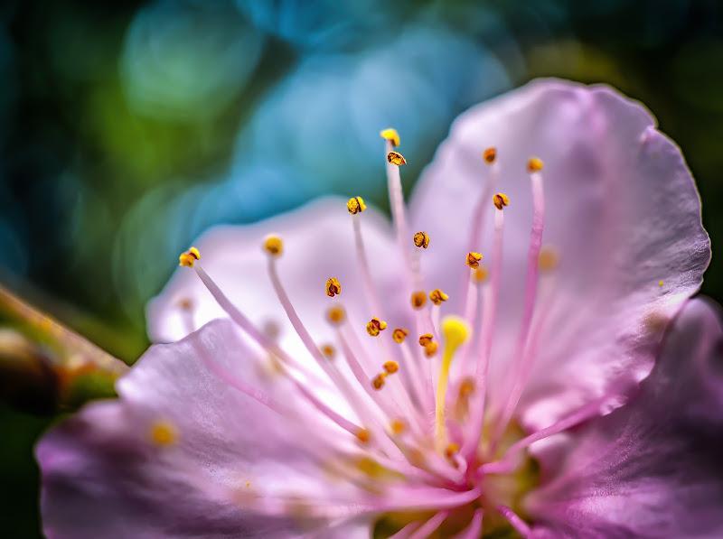 Fiore... di diego_silvani