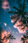 Summer And Tropical by Anonymous