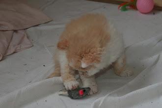 Photo: 34 Tage: im großen Kitten-Auslauf ist spielen angesagt
