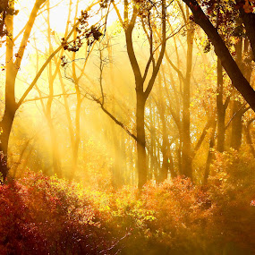 by Andy Barrow - Backgrounds Nature
