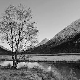 Last October by Patricia Phillips - Black & White Landscapes ( alaska travel tern lake black and white )