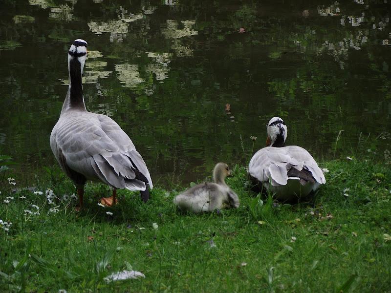Family.. di alegio89