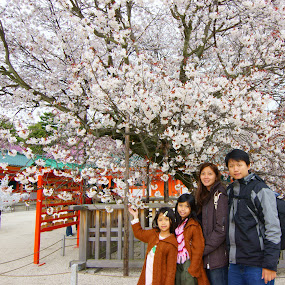 JAPAN SAKURA by Hendrianto YAP 叶 长 財 - People Family