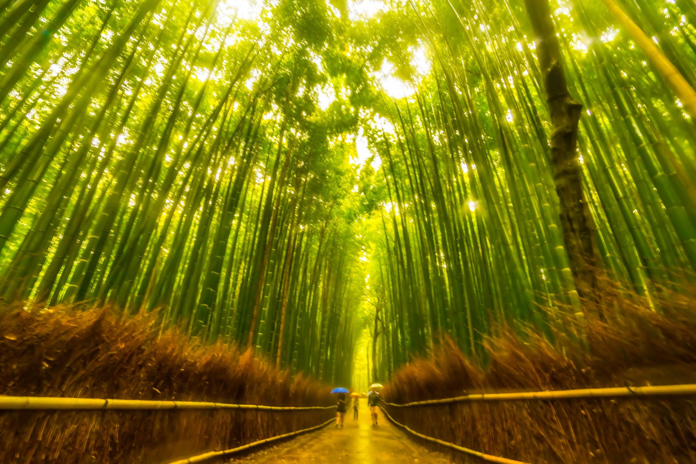 京都 竹林の道2