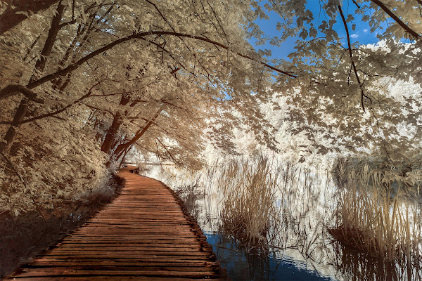 Wooden path in Paradise di Sara Jazbar