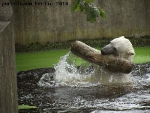 Photo: Und hoch mit dem Stamm ;-)