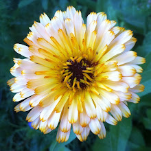 Photo: Beautiful flower #white #yellow #green #intercer #romania #flower - via Instagram, http://instagr.am/p/MD5dBopfi6/