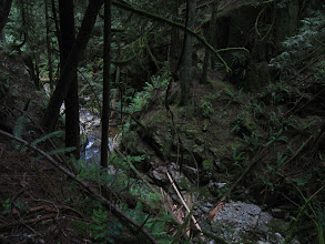 Photo: Nelson creek in the valley
