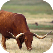 Fauna of Texas