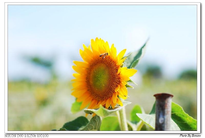 D80向陽農場試拍