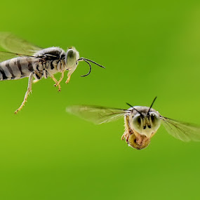 fly together by Balox Berhati Nyaman - Uncategorized All Uncategorized ( natural light, macro, nature, fly, wildlife )