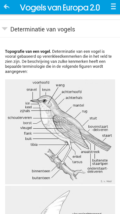 Vogels van Europa- screenshot